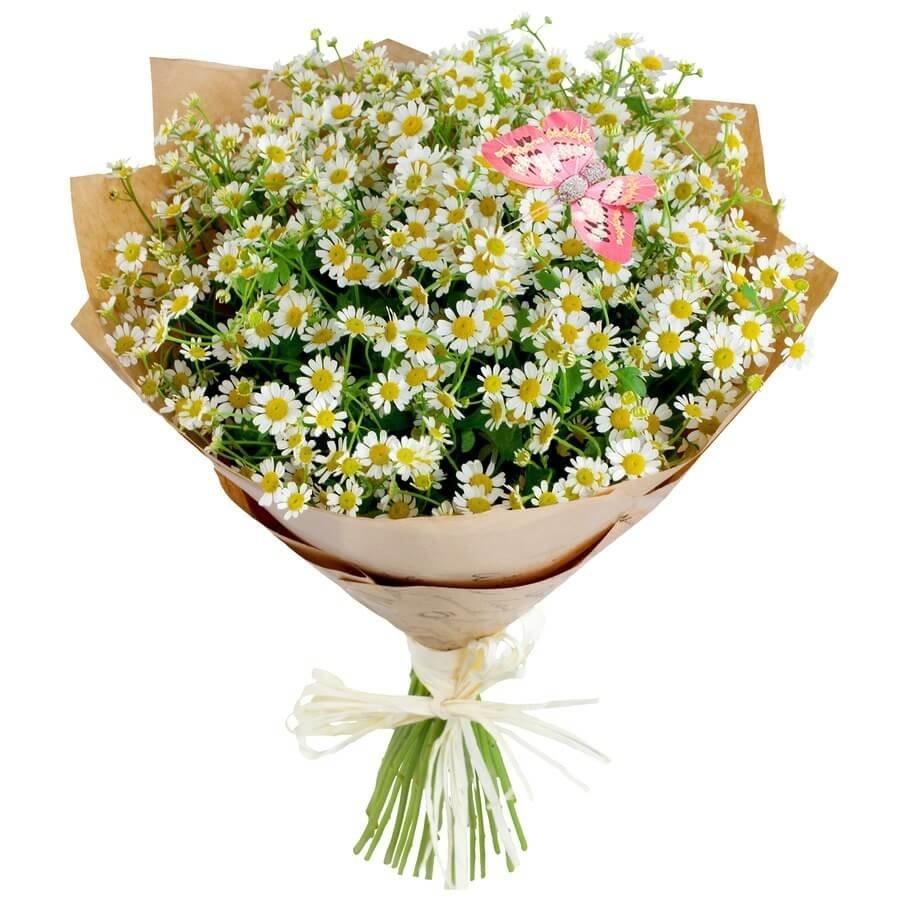 Доставка цветов, ромашки букет продажа