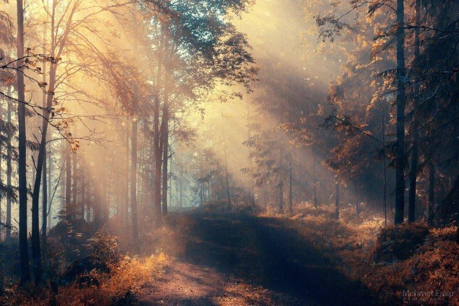 Золотая осень совсем скоро вступит в свои права. Поэтому предлагаем взглянуть на осенние пейзажи Mehmet Eralp. Тропинки, уÑодящие в туманную даль, рассветы на озере...