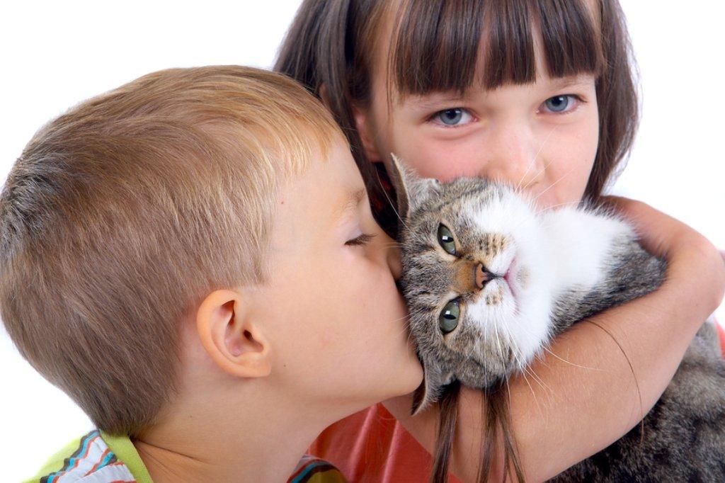Открытка, картинка с кошками для детей смешное