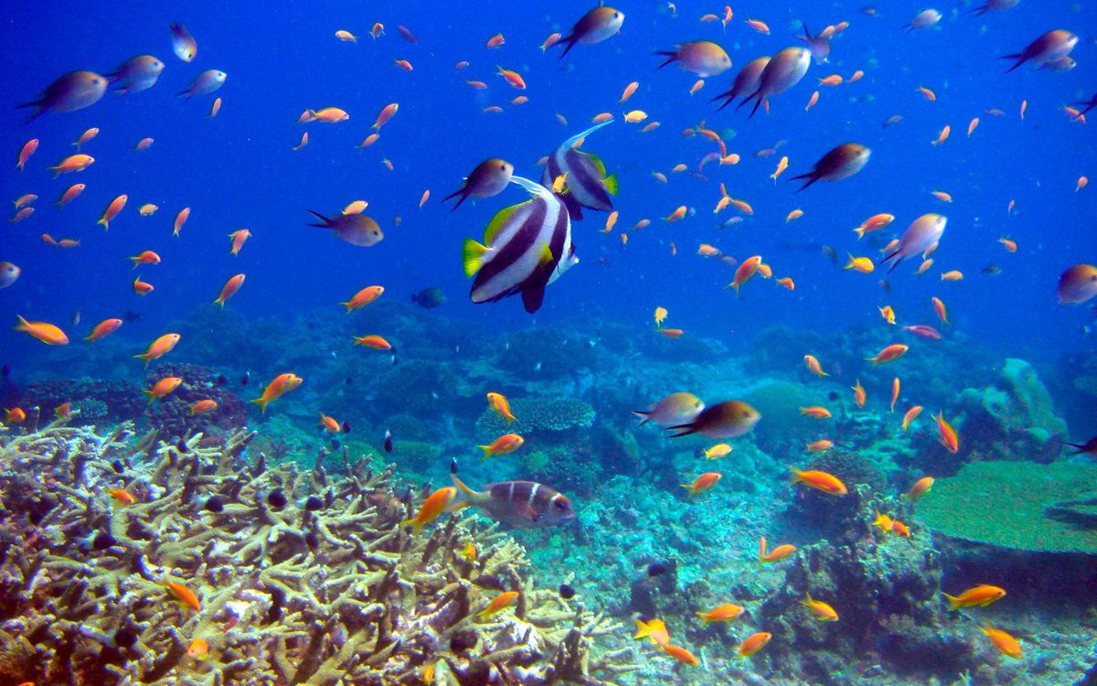 вкус картинки дна океана с рыбками ангел