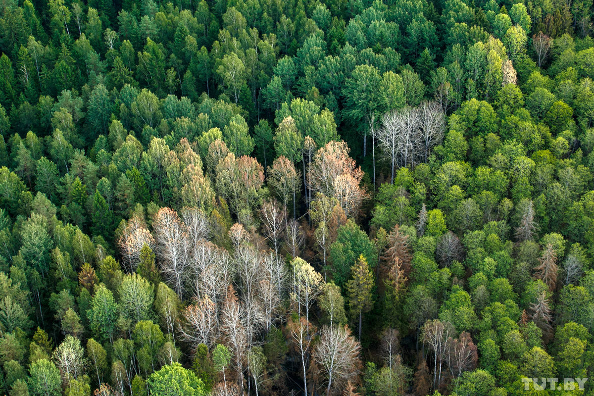 леса на территории россии картинки быстрорастущее