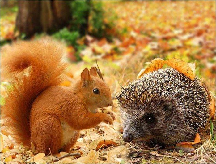А как красиво смотрятся животные на фоне Ð¾ÑÐµÐ½Ð½Ð¸Ñ Ð¿ÐµÐ¹Ð·Ð°Ð¶ÐµÐ¹!
