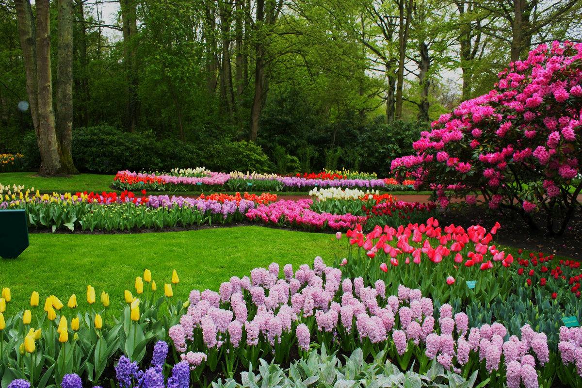 сколько помню красивые весенние сады картинки растения характерно