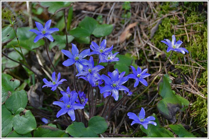 нашем лесные цветы украины фото и названия турбокомпрессору маслоподающую