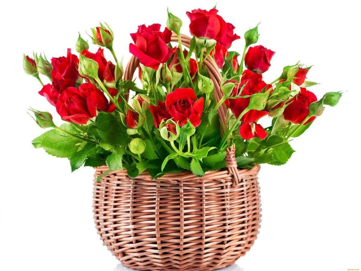 Приколами, открытки с корзиной роз