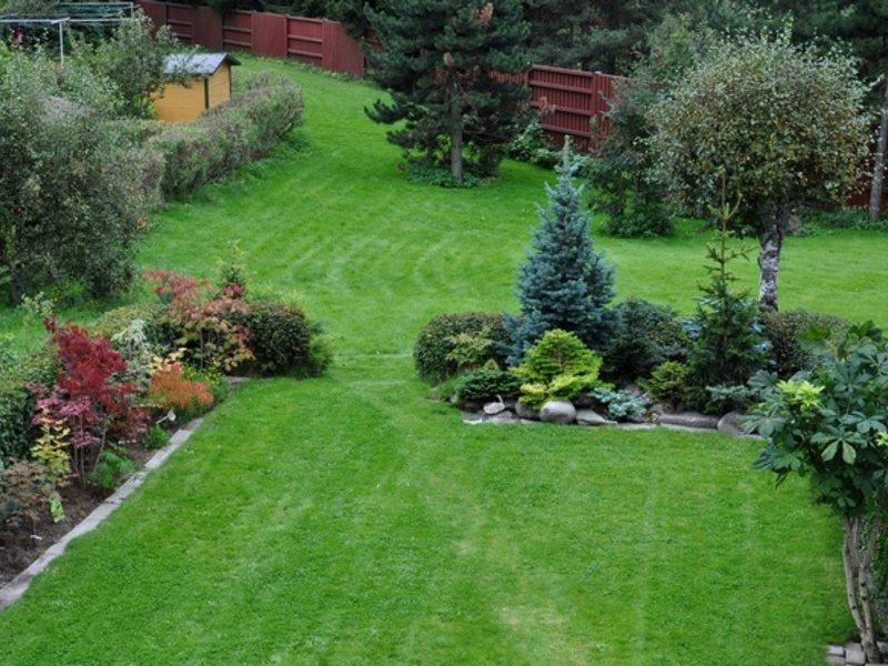 Какой сад лучше посадить