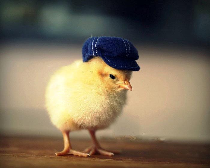 Картинки цыплят с приколами, открытка временам года