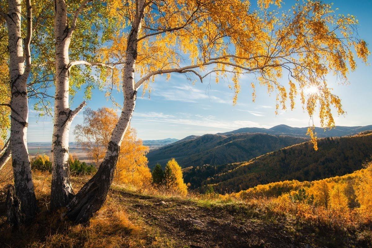 Алтайский край природа фото