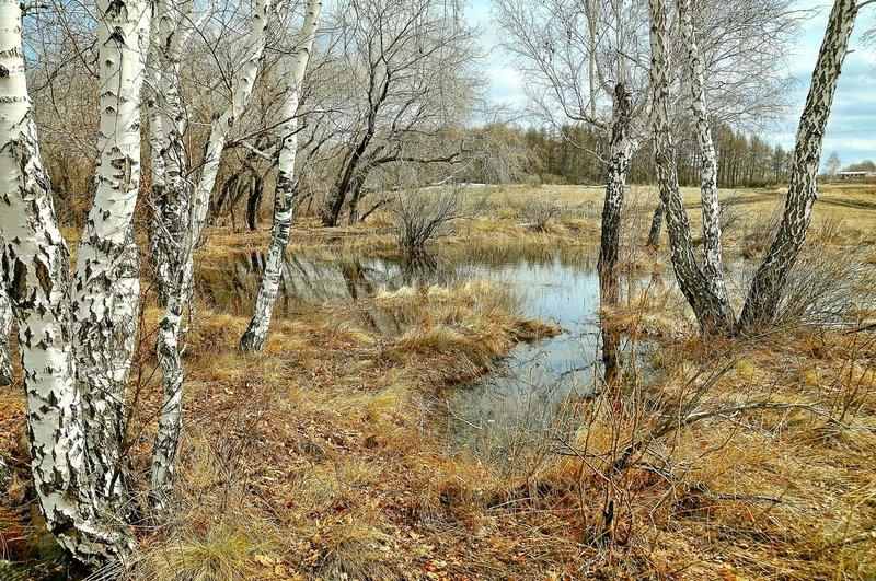 Весна в лесу. Омская область. Сибирь.