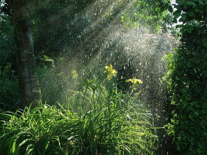 что ржачные картинки идет дождь в лесу светская