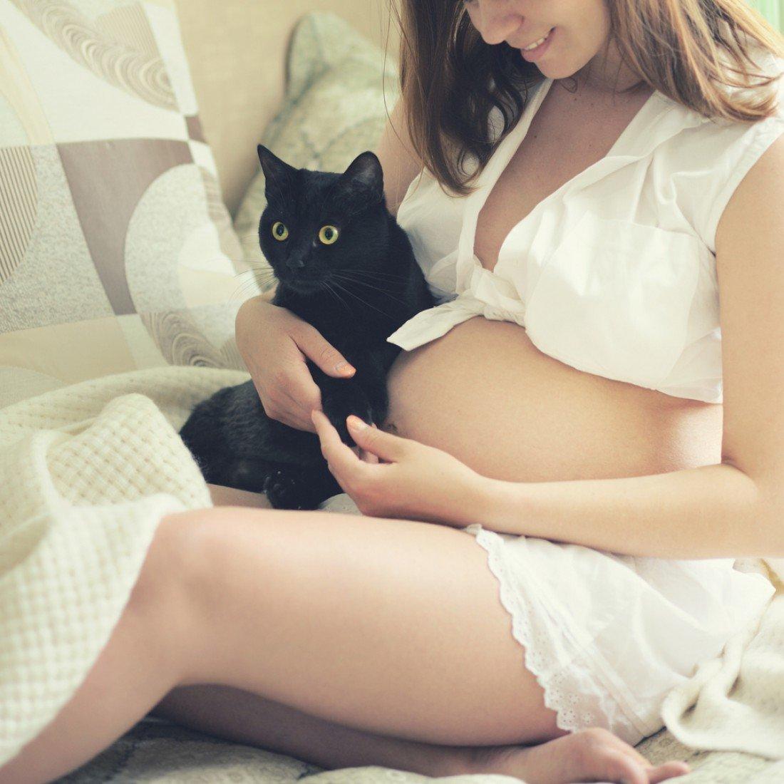 Кошка символизирует льстивого человека в окружении мужчины или женщины, который способствует развитию комплексов у сновидца и принятию неверных решений.
