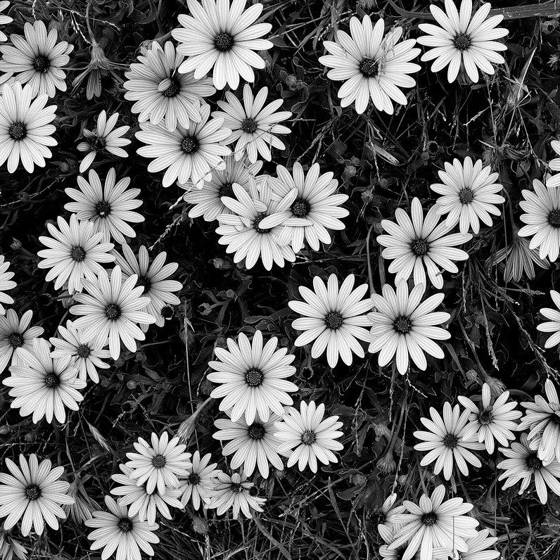 вдохновляющие черно-белые картинки одной фотографий