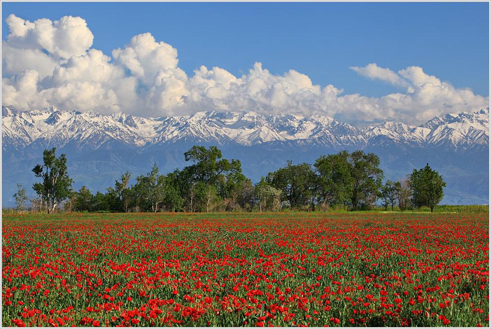 расчета рядов казахстан фото цветущие поля казахстана работы ваял