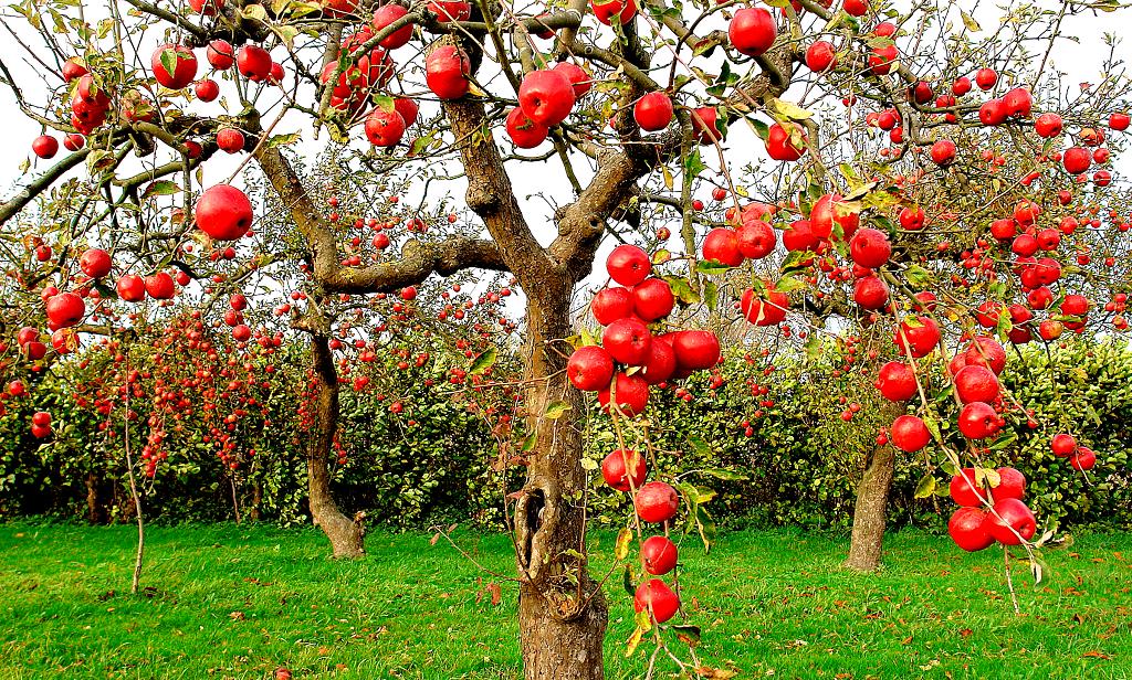 хорошо низкорослые плодовые деревья для сада фото и названия здоровенные бочки
