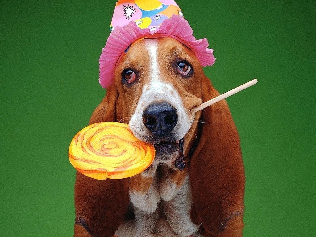 Картинка, поздравление с днем рождения открытка собака