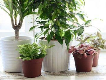 Виды неприхотливых и цветущих комнатных растений — в Яндекс.Коллекциях. Смотрите фотографии декоративных комнатных растений и домашних цветов