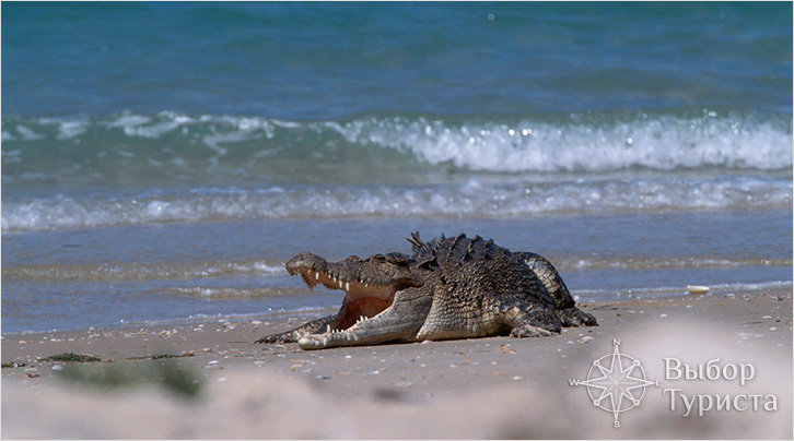 Природа Какаду поражает воображение. Здесь располагается свыше сорока видов фауны, которые в настоящее время являются вымирающими. Кроме того, это самое большое в южном полушарии место обитания птиц. Парк Какаду – место, где живут солоноводные крокодилы.