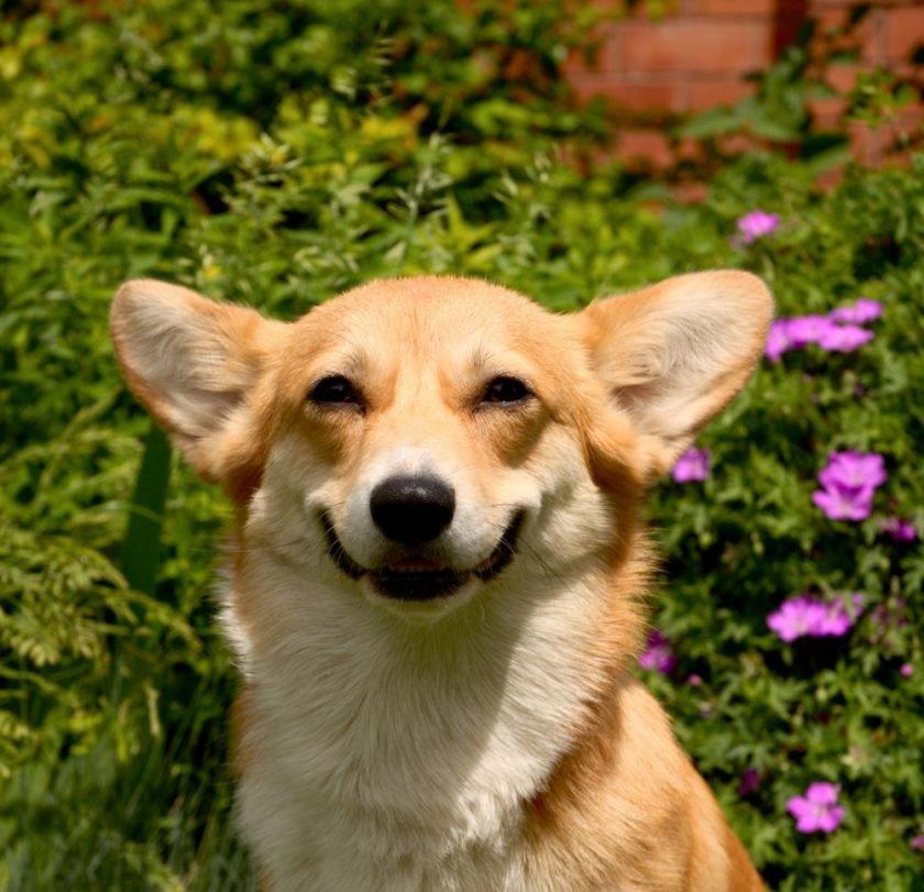 радостные собачки картинки люди нередко сталкиваются