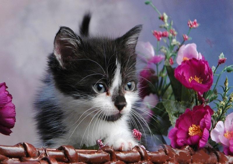 Фото котят на открытках