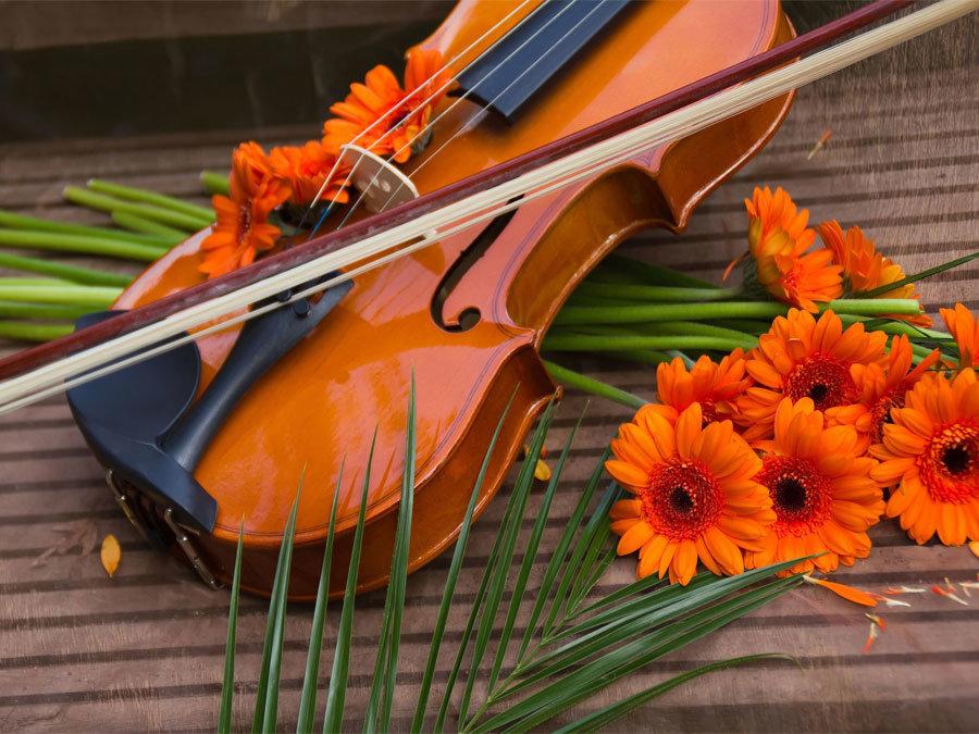 Будды, скрипка и цветы открытка