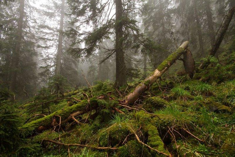 Фото в лесу раком 18761 фотография