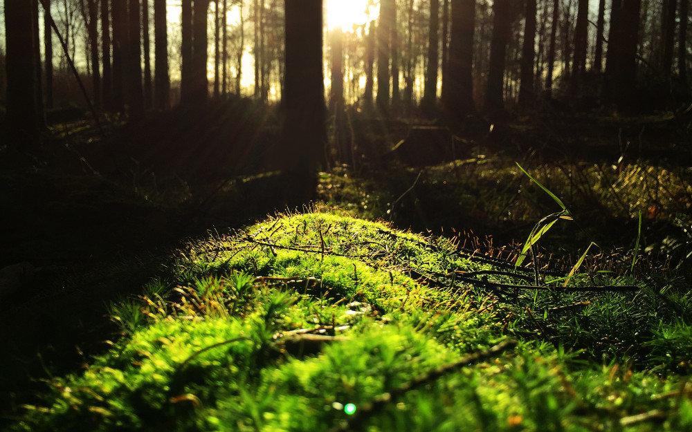 земля в лесу и очищение кармы