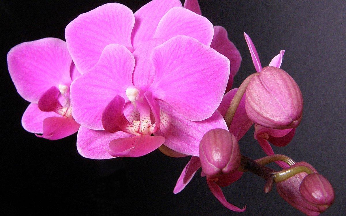 Как поливать орхидею, если ее купить и пересадить в домашних условиях
