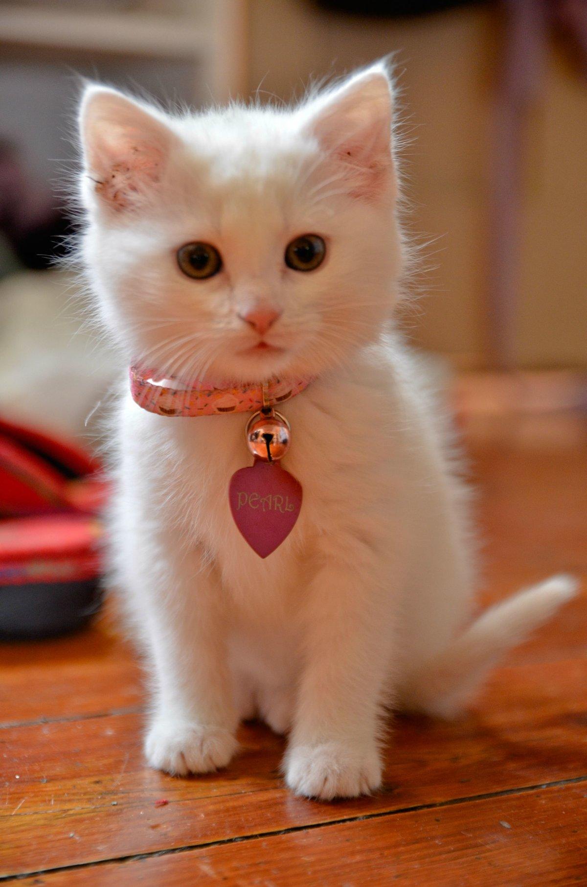 фото котят с сердечками