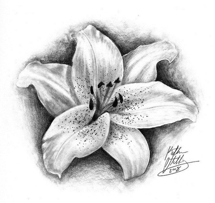 Картинки лилии для тату