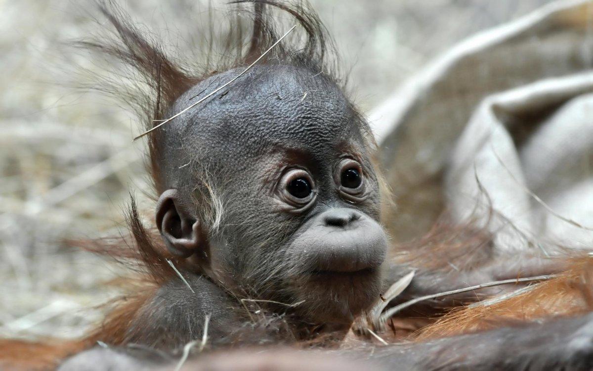 Днем рождения, интересные картинки с животными смешные