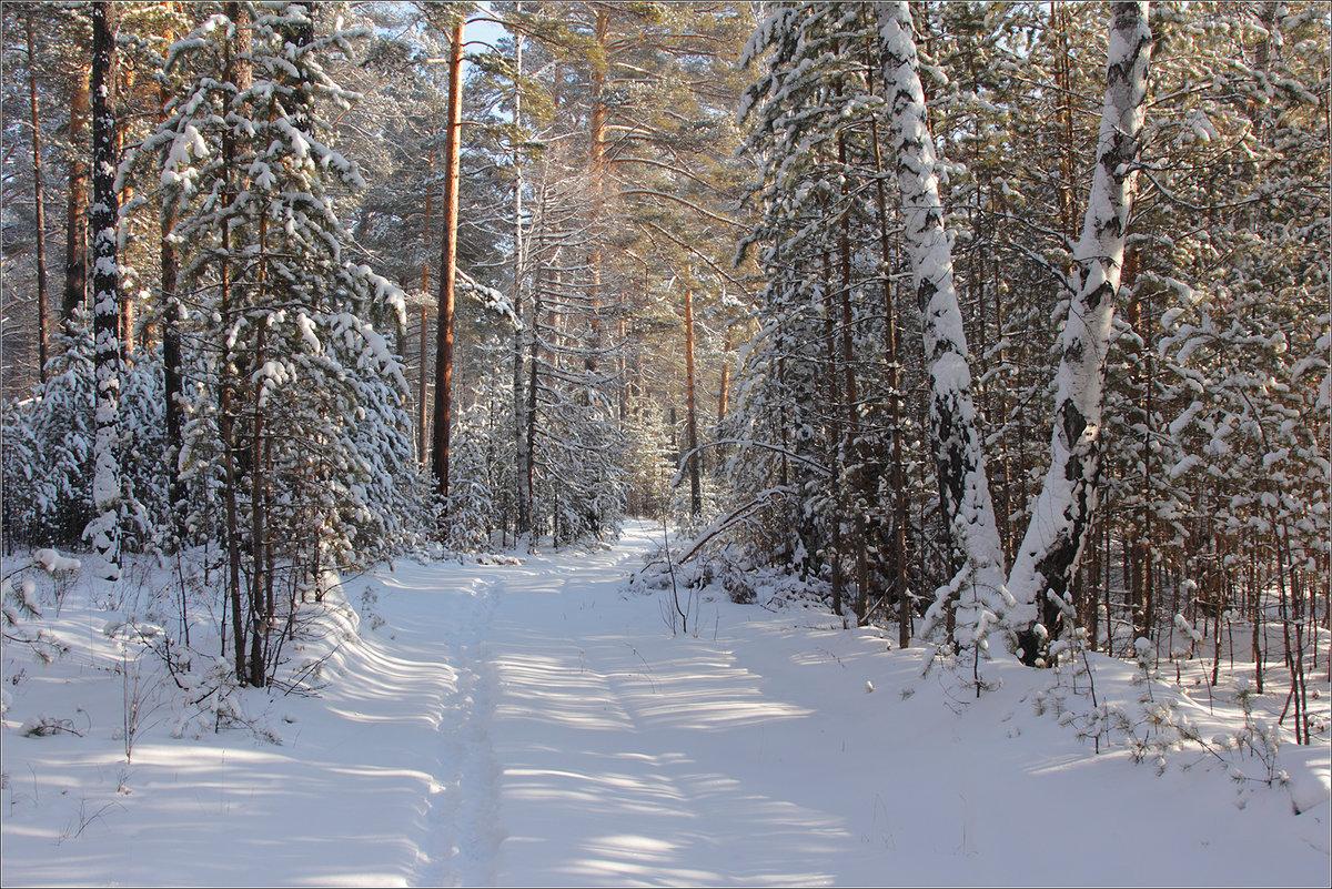 Зимние фотографии русских лесов