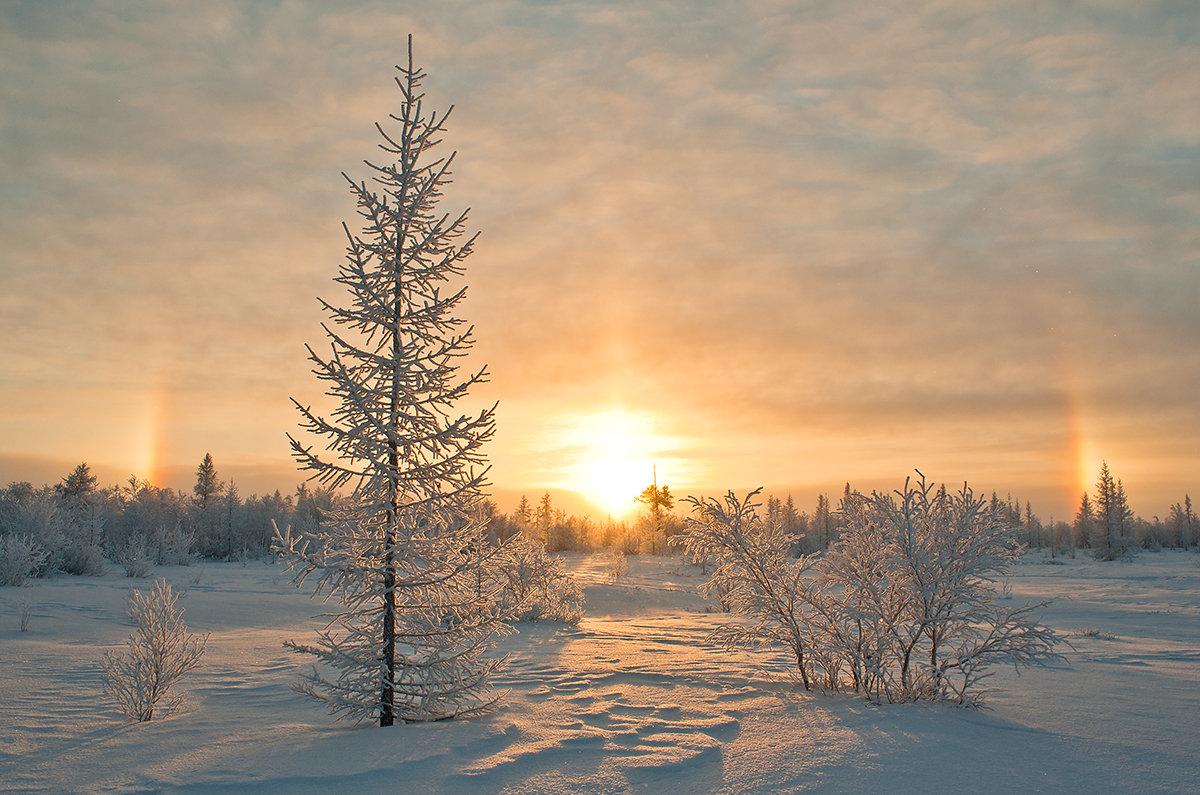пейзаж север зима фото лев львица львенок