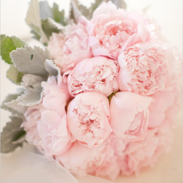 Красивые нежные цветы фото