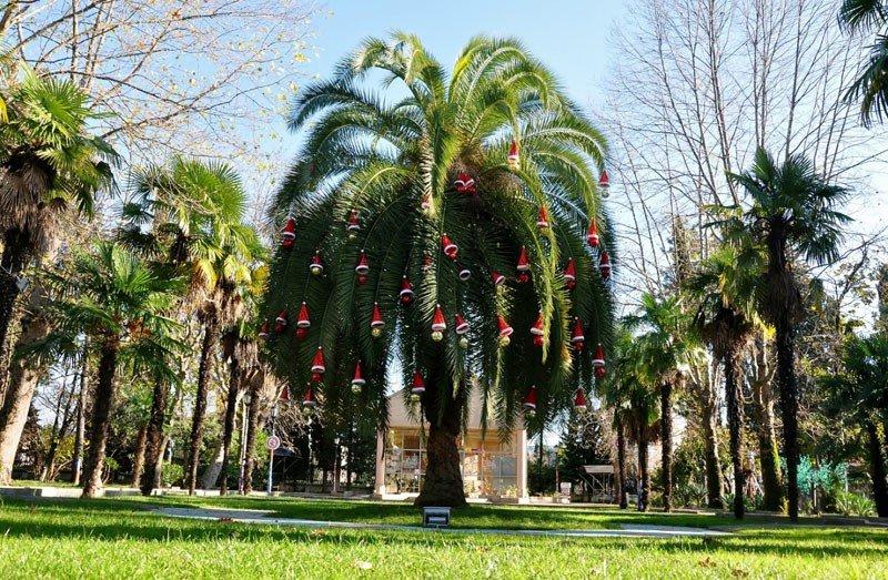 Порадовала новогодняя пальма в парке «Ривьера». Она моментально стала не только главной достопримечательностью, но и главным символом этого Нового года.