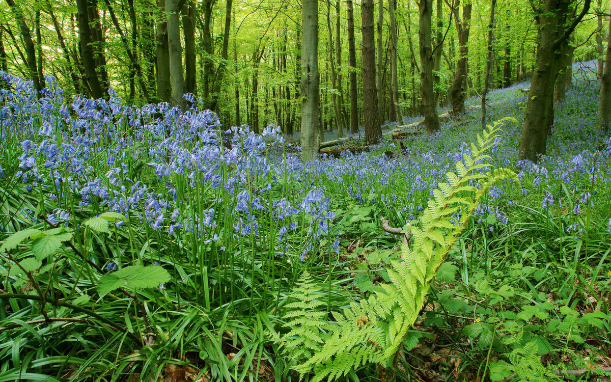 Картинка леса и растений