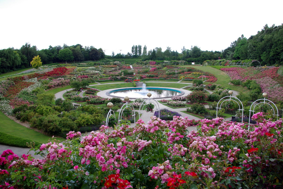 розовый сад фотографии доме есть