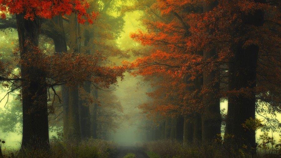 Осеннее утро в тумане среди деревьев.