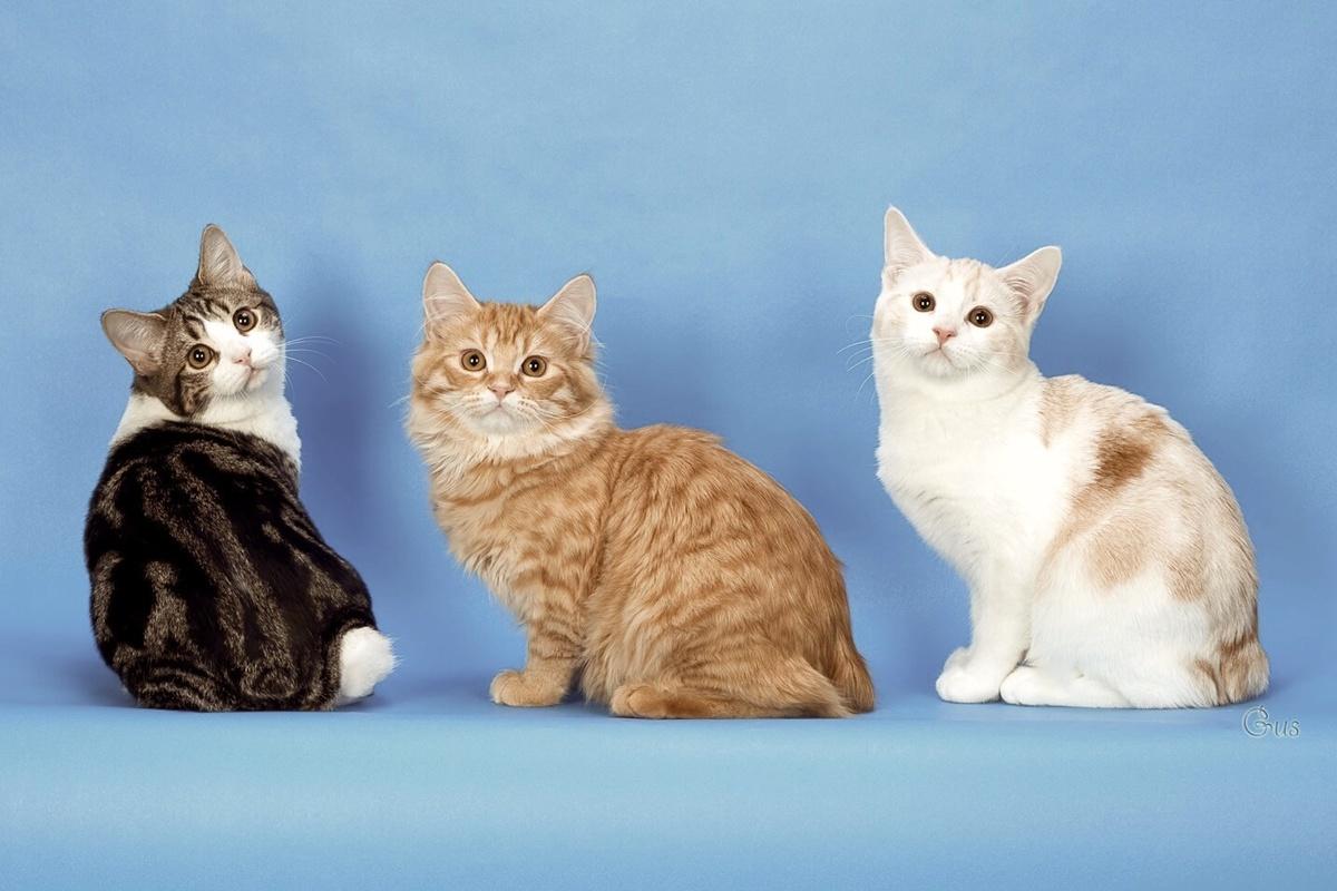 Картинки и фото разных кошек