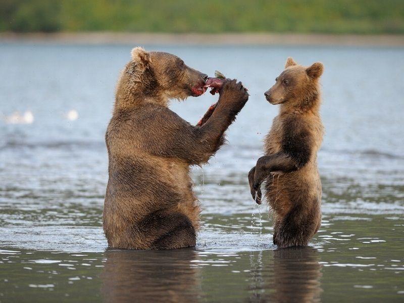 Влюбленная медведица смешная картинка
