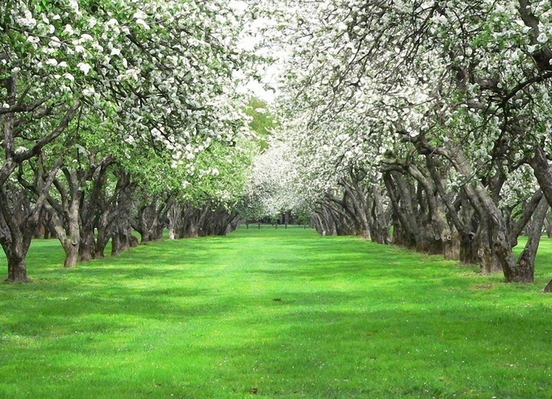 Города губкина, открытки яблоневый сад