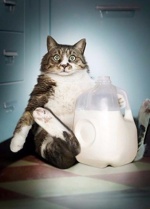 Кот и сметана картинка смешная
