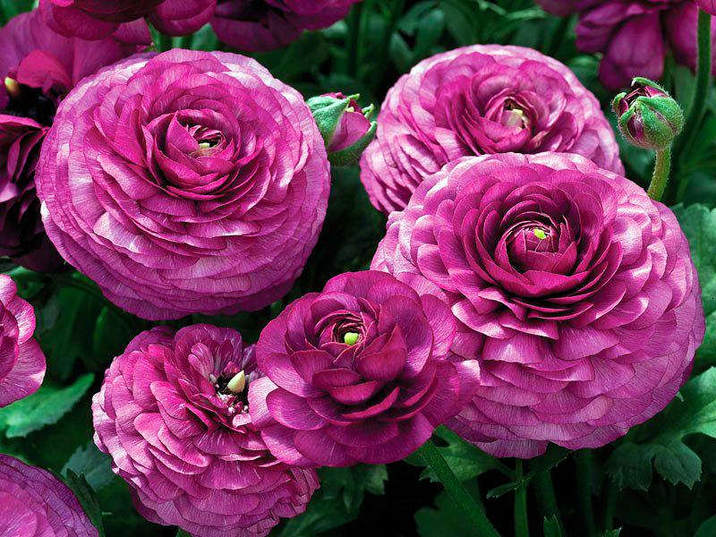 Места для прорастания должны быть слегка влажные, но не сырые — цветок может начать увядать; Нельзя допускать полного высыхания грунта