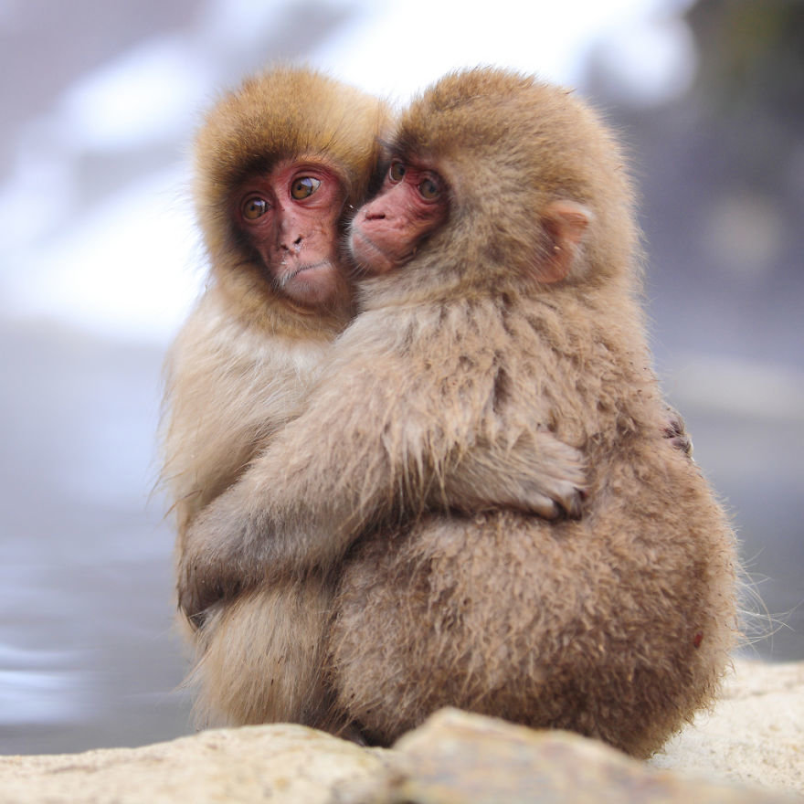 Картинки животные любовь смешные, поздравляем днем