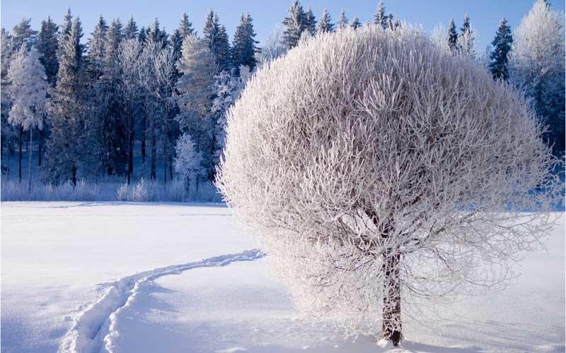 Русский лес зимой