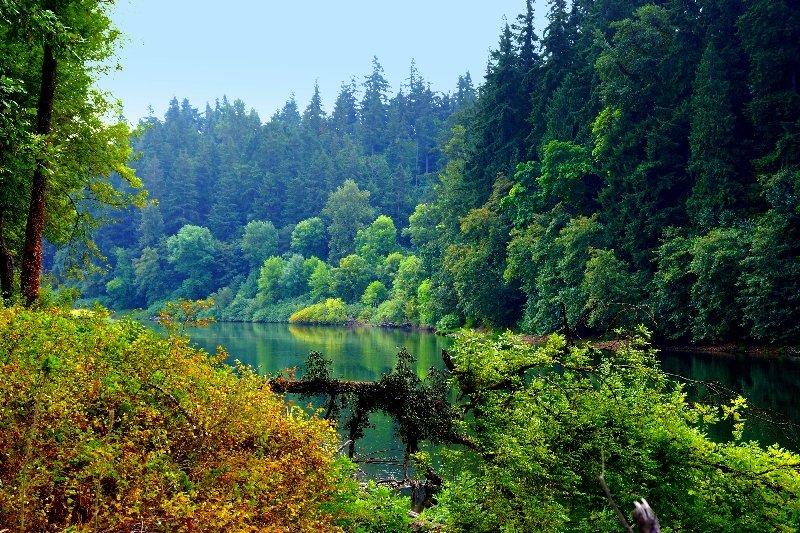 мамадышском красивые картинки лес высокого качества распоряжении военных оказались