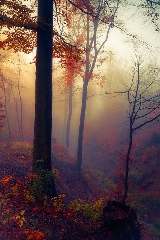 Autumn mist                                                                                                                                                                                 More: