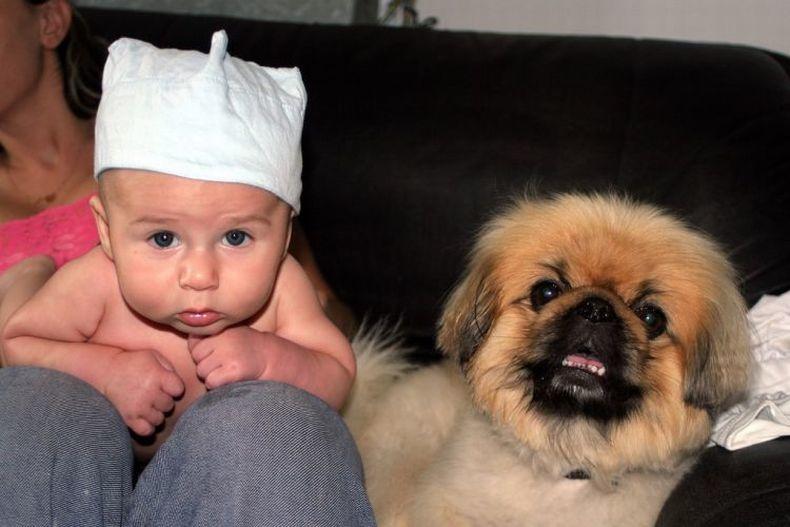 Картинки дети и собаки смешные
