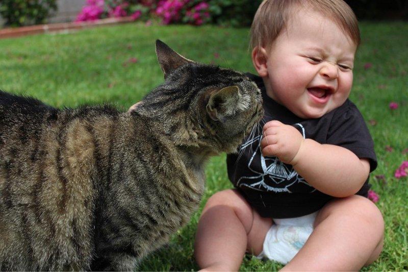 Открыток, прикольные картинки про животных и детей
