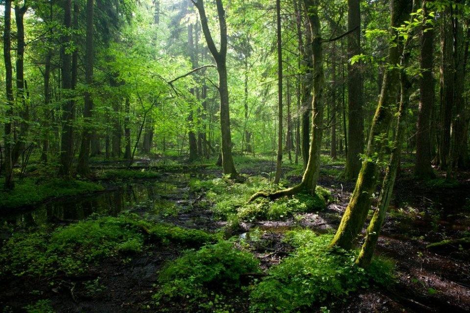 экосистема леса фото результат