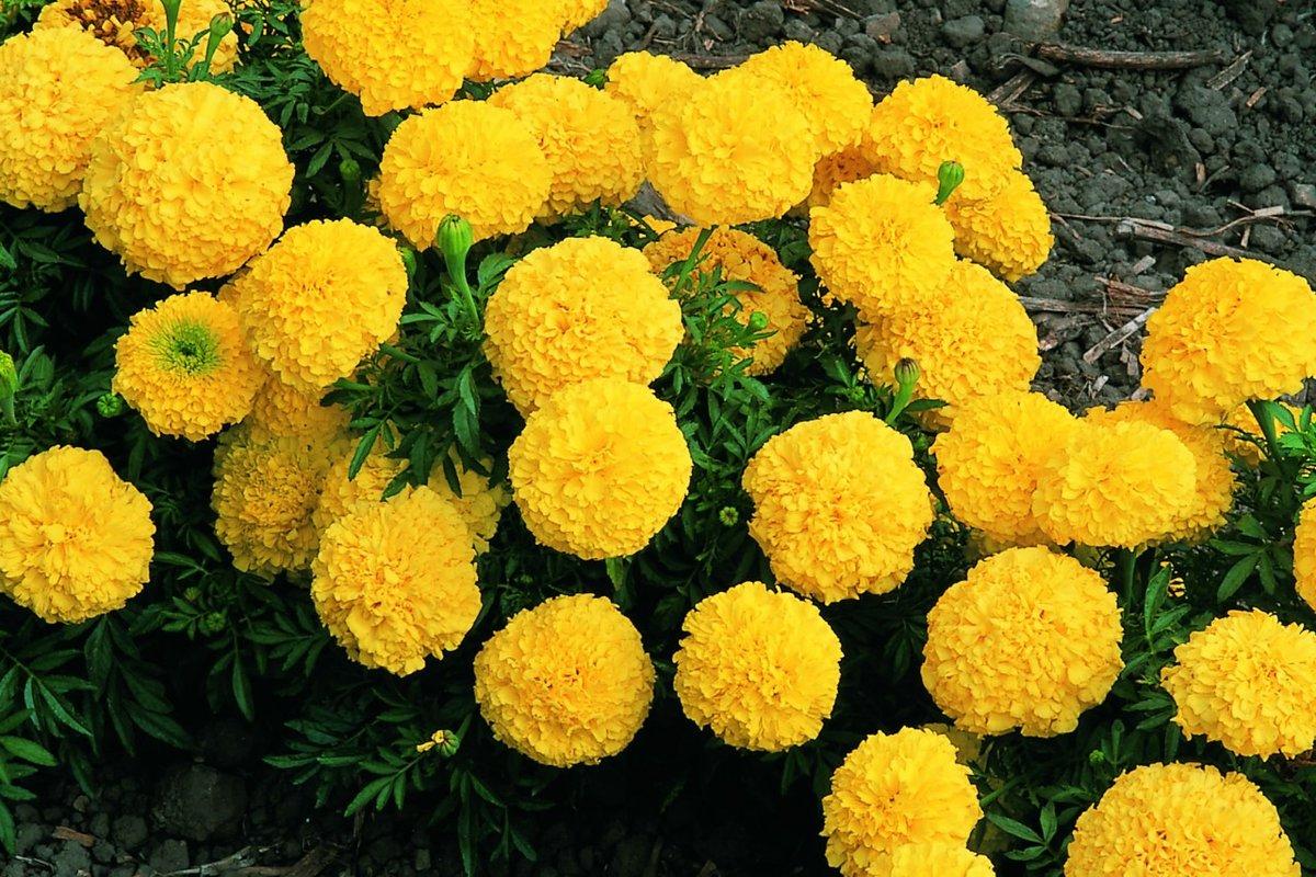 Купить цветы садовые в украине, букет английских